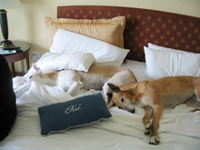 Want A Quick List Of Petfriendly Hotels Do Search On My Favorite Trip Advisor Already Filtered For Mammoth California And Here Is The